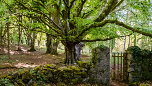 Portumna Forest Park – Forest Friendly Walking Trail