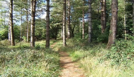 Portumna Forest Marathon June
