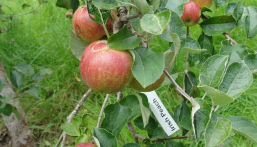 Drop into Irish Seed Savers to see organic seed gardens, orchards and woodlands