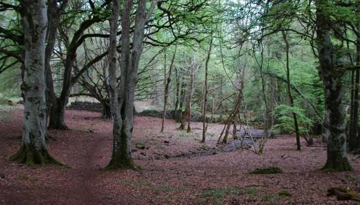 Portumna Forest Marathon May