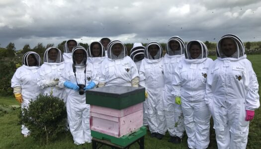 Leahy Beekeeping