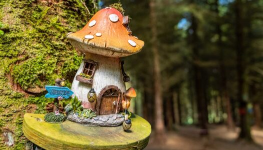 Week 6 – 12 O'Clock Hills Fairy Trail