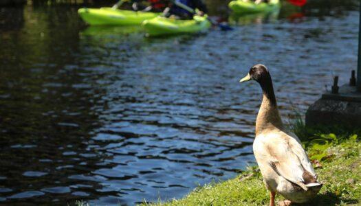 Week 4 – Kayak Lough Derg